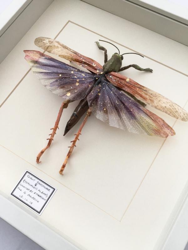 Framed Handmade Grasshopper