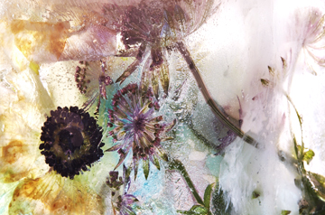 Oasis Melt Flowers Ice Cubes