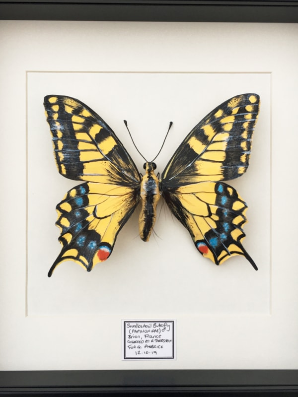 Framed Paper Swallowtail Butterfly