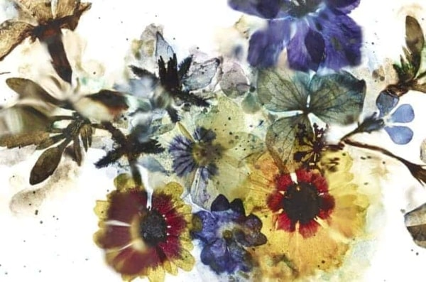 Watercolour Dried Flowers Still Life